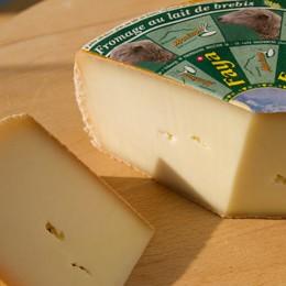 Faya- sheep cheese